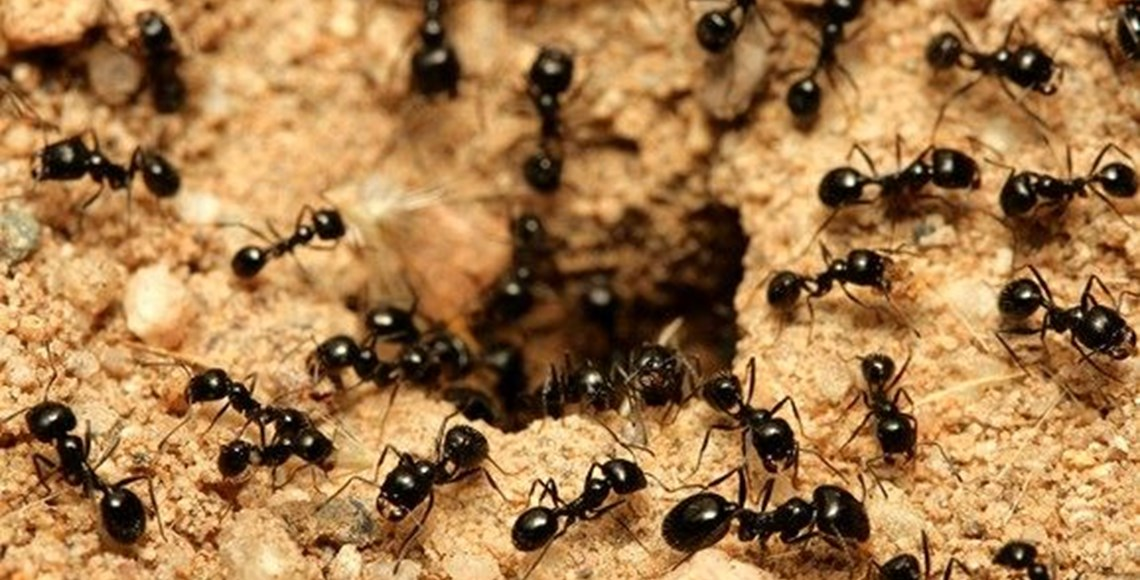 how do i get rid of ants in my home mortein